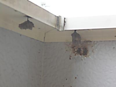 ベランダのハチ駆除、ハチの巣撤去のイメージ画像、ハチの巣の写真1