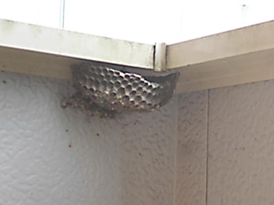 ベランダのハチ駆除、ハチの巣撤去のイメージ画像、ハチの巣の写真2