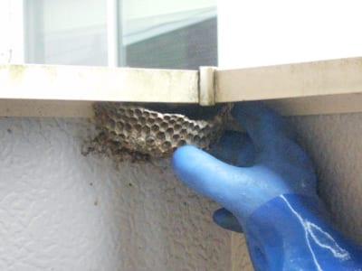 ベランダのハチ駆除、ハチの巣撤去のイメージ画像、ハチの巣撤去中の写真2