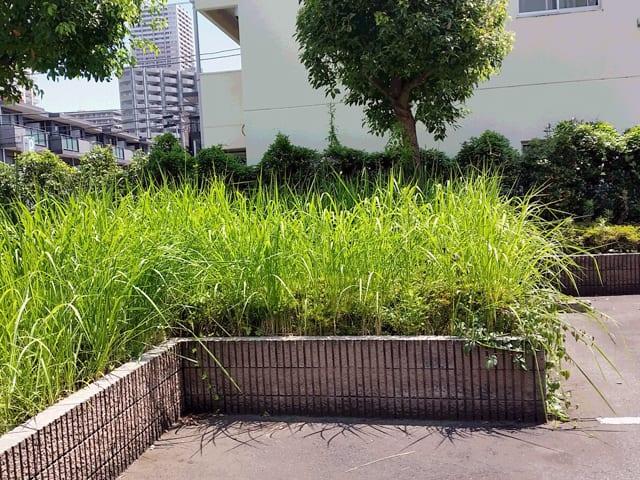 賃貸アパート・マンションの管理・メインテナンス、建物まわりの除草・植栽剪定のイメージ画像、除草前の写真1