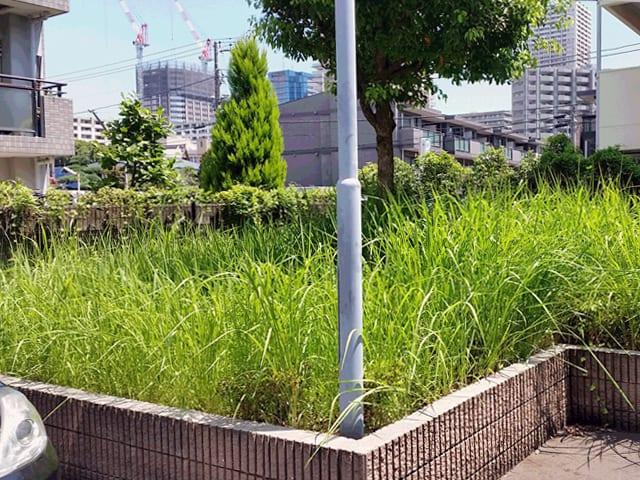 賃貸アパート・マンションの管理・メインテナンス、建物まわりの除草・植栽剪定のイメージ画像、除草前の写真2